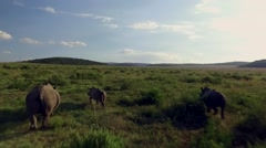 Low Tracking Aerial of White Rhino family Running though Private Game Reserve Stock Footage