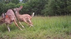 Whitetail Deer Bambi Twins Stock Footage