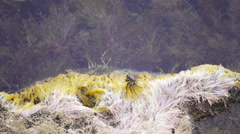 Crab sits on the edge of shore near water Stock Footage