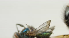 Close-up of dead flies in a row, slider shot Stock Footage