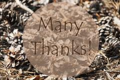 Autumn Greeting Card With Text Many Thanks - stock photo