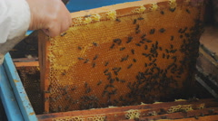 Elderly beekeeper showing the panel from the beehive Stock Footage