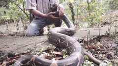 Boa constrictor moving around the hand of a biologist Stock Footage