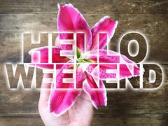 Woman hand holding pink lily with word Hello Weekend Stock Photos