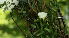 Female hands touching petals of white roses in bud in park, close-up Stock Footage