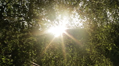 Sun shining through a leaves in the morning time. - stock footage
