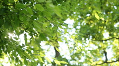 Fresh green leaves in a forest framing the sun in the middle and forming rays of Stock Footage