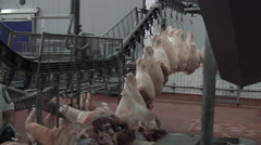 Slaughterhouse for pigs Stock Footage