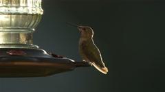 A Hummingbird at a Bird Feeder Stock Footage
