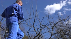 Skilled garden worker man climb on ladder and prune fruit tree branches Stock Footage