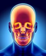 3D illustration of skull anatomy - part of human skeleton. Stock Illustration