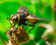 Detailed macro of big fly in the grass - stock photo