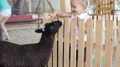 Cute baby girl feeding sheep from her hands Stock Footage