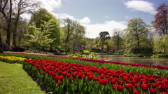 Red tulips in a beautiful garden with a blue sky and white clouds, 4K time lapse - stock footage