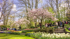 Visitors enjoying blooming trees in a beautiful garden, 4K time lapse Stock Footage