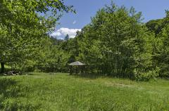 Panorama of glade and  green  forest Stock Photos