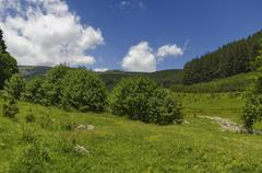 Panorama of ecological path through a  green summer forest - stock photo