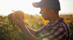 Young farmer in cap checks maturing sunflower. Stock Footage