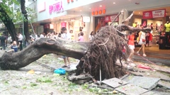 Typhoon toppled trees down on the street Stock Footage