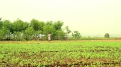 Farmer crosses a field along a path in Bengal, India Stock Footage