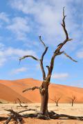 Tree skeletons, Deadvlei, Namibia Stock Photos