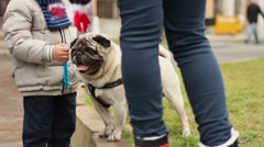 Little boy petting cute fawn pug in park, love for animals, family weekend Stock Footage