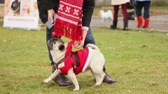 Happy dog wearing nice Santa suit enjoying morning walk in park with owner Stock Footage