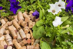 Cork of Italian Wine Stock Photos