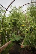 Greenhouse crop seedlings Stock Photos