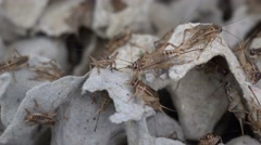 Crickets in industrial farm Stock Footage