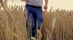 Boy сhild and his dad running around the wheat field - stock footage