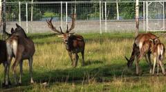 Deer in a green park. 4K. Stock Footage
