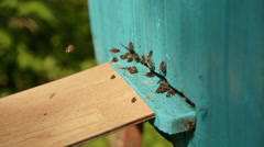 Bees fly in and fly out of blue beehive Stock Footage