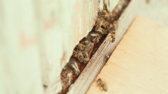 Bees fly in and fly out of white beehive Stock Footage