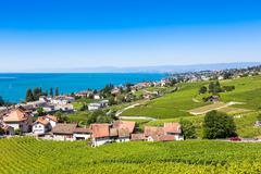 Vineyards in Lavaux region - Terrasses de Lavaux terraces, Switzerland Stock Photos