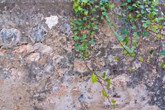 Wall texture with green leafy vine - stock photo