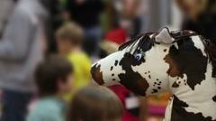 Active atmosphere at kindergarten, children having snacks, defocused background Stock Footage