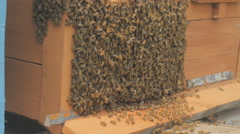 Swarm of bees on a bee box at a Hawaii bee farm Stock Footage