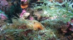 Costa Brava, diving the Mediterranean sea, Nudibranch, Spain Stock Footage