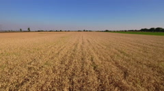 Aerial shot of a wheat field - stock footage