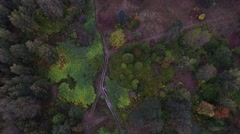 Flight Over the Scenic Autumn Forest Stock Footage