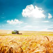 Combine Harvester on a Wheat Field. Agriculture. Stock Photos