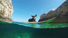 SLOW MOTION, UNDERWATER: Cute miniature pinscher lying on surfboard in the sea Stock Footage