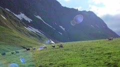 Flock of sheep grazing on a green High Mountains hill and move down Stock Footage