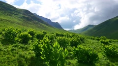 Beautiful green Alpine valley with fresh spring plants in sunny day Stock Footage