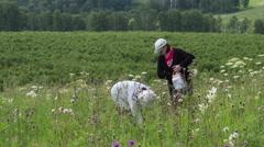 Gathering wild strawberry Stock Footage
