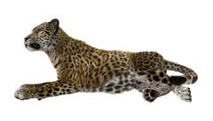 3D Rendering Big Cat Jaguar - stock illustration