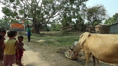 Village scene in India, with cow Stock Footage