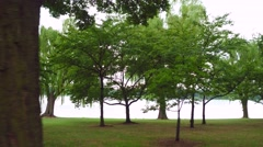 Potomac Park Weeping Willow trees Stock Footage