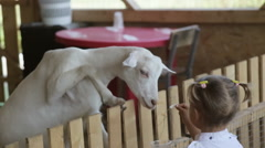 Cute baby girl feeding goat from her hands Stock Footage
